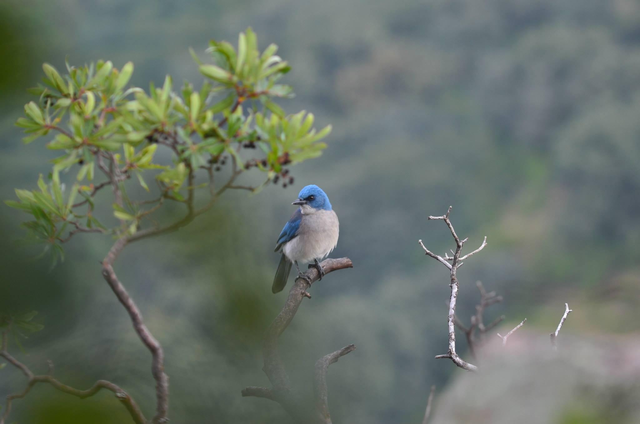Aves ~ Birds